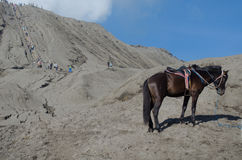 Cheval près de Volcano Bromo, Java, Indonésie Photographie stock