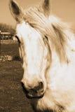 Cheval rêveur exotique Image libre de droits