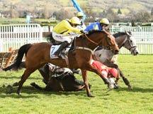 Cheval Racing Images libres de droits