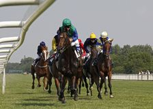 Cheval racing_3 Photos libres de droits