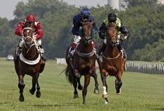Cheval racing_5 Images libres de droits