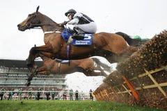 Cheval Racing photo libre de droits