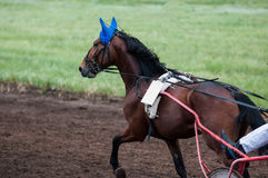 Cheval Racing Photographie stock