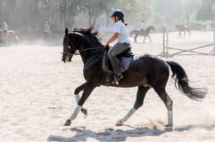 Cheval Racing Photo libre de droits