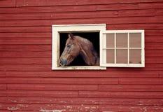Cheval regardant hors de la fenêtre de stalle de la grange rouge photographie stock