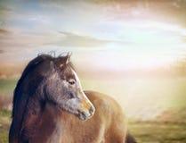 cheval regardant le fond des pâturages et du beau ciel Photo stock