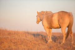 Cheval regardant loin le coucher du soleil Images stock