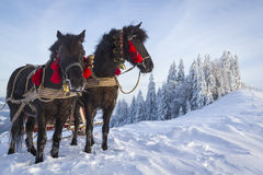 Cheval riant photographie stock