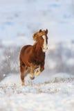 Cheval rouge couru dans la neige photo libre de droits