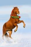Cheval rouge dans la neige Photo stock