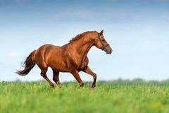 Cheval rouge dans le mouvement image libre de droits