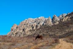 Cheval rouge près d'une route de campagne en bas de mounta Images libres de droits