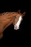 Cheval rouge sur le noir photographie stock libre de droits