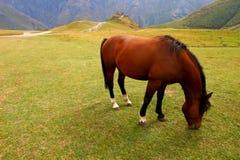 Cheval rouge sur un pâturage de montagne Image libre de droits