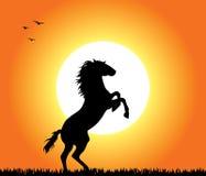 Cheval s'élevant au coucher du soleil Photo libre de droits