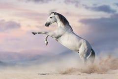 Cheval s'élevant vers le haut images libres de droits