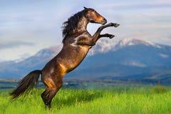 Cheval s'élevant vers le haut Photographie stock libre de droits