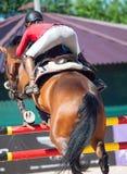 Cheval sautant avec le cavalier Images stock