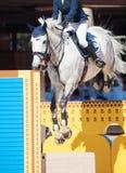 Cheval sautant avec le cavalier Photographie stock