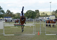 Cheval sautant d'exposition de vue arrière et événement équestre de cavalier à la foire Images libres de droits