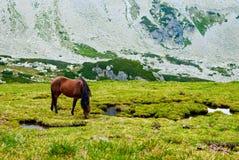Cheval sauvage Photo stock