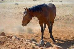 Cheval sauvage Photos libres de droits