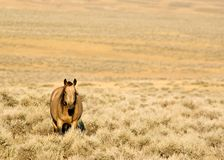 Cheval sauvage Photo libre de droits