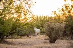 Cheval sauvage Image stock