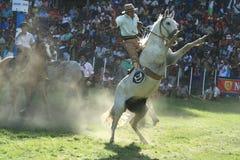 Cheval sauvage dans le festival Image libre de droits