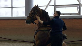 Cheval se reposant Alimentation d'un cheval hors de toute réflexion Le cheval est brun banque de vidéos