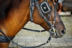 Cheval sellé et avec des abat-jour Photographie stock libre de droits