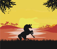 Cheval silhouetté sur le coucher du soleil Photo stock