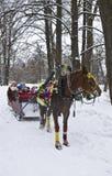 Cheval Sleigh en parc d'hiver Images libres de droits