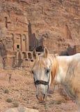 Cheval solitaire près de la tombe d'urne dans PETRA Photos stock