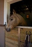 Cheval, stable Photo stock