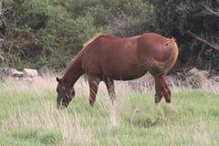 Cheval sur l'herbe Photographie stock libre de droits