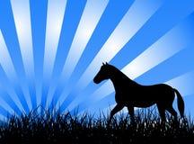 Cheval sur l'herbe illustration de vecteur