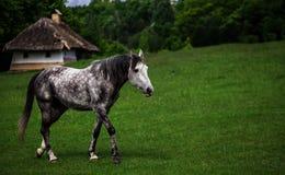Cheval sur l'herbe verte Photo libre de droits