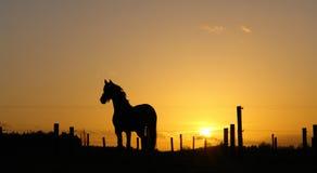 Cheval sur l'horizon éclairé à contre-jour par coucher du soleil Photographie stock