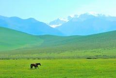Cheval sur la montagne Image libre de droits