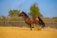 Cheval sur la nature Portrait d'un cheval, cheval brun Photographie stock libre de droits