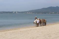 Cheval sur la plage Images libres de droits