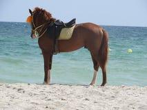 Cheval sur la plage en Tunisie, Afrique un temps clair contre la mer bleue image stock