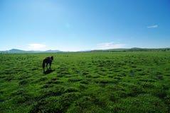 Cheval sur la prairie Images libres de droits