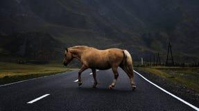 Cheval sur la route Image libre de droits
