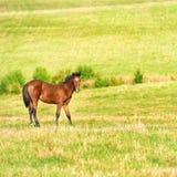 Cheval sur la zone verte Photo stock