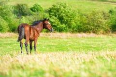 Cheval sur la zone verte Photo libre de droits