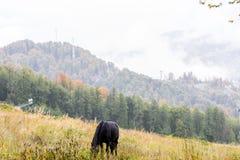 Cheval sur le meado de montagne Images stock