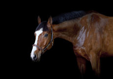 Cheval sur le noir Photo stock