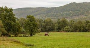 Cheval sur le pré avec la montagne carpathienne à l'arrière-plan photos stock